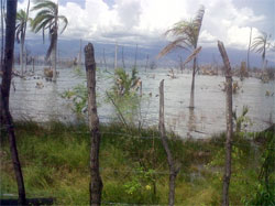 The swelling waters of Lago Enriquillo in the Dominican Republic